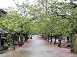 がいせん桜20090426.jpg